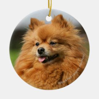 Pomeranian Watching Christmas Ornament