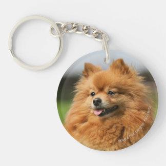 Pomeranian Watching Double-Sided Round Acrylic Key Ring