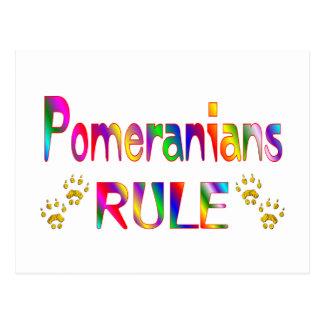 Pomeranians Rule Postcard