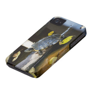 Pond slider turtle in the wild Case-Mate iPhone 4 case