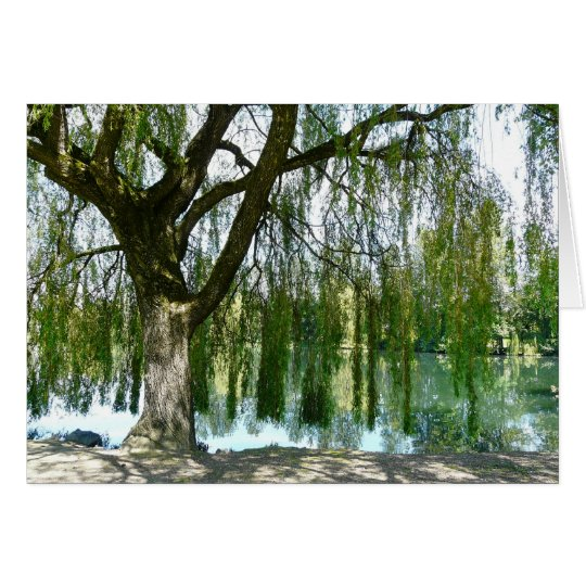 Pond through the Weeping Willow Tree Card