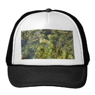 "Pond Weed (or, ""Lush Pond Plantlife"") Cap"