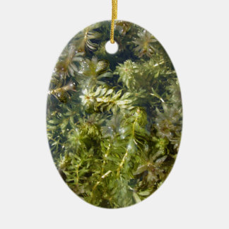 "Pond Weed (or, ""Lush Pond Plantlife"") Ceramic Oval Decoration"