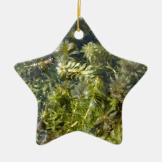 "Pond Weed (or, ""Lush Pond Plantlife"") Ceramic Star Decoration"
