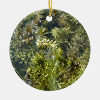 "Pond Weed (or, ""Lush Pond Plantlife"") Round Ceramic Decoration"