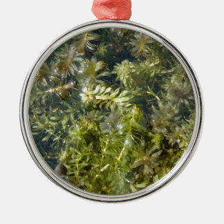 """Pond Weed (or, """"Lush Pond Plantlife"""") Silver-Colored Round Decoration"""