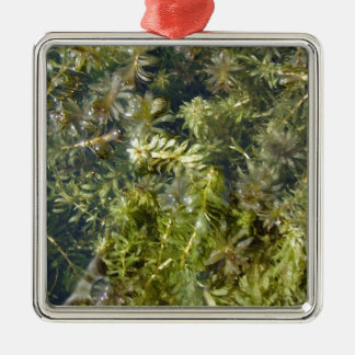 "Pond Weed (or, ""Lush Pond Plantlife"") Silver-Colored Square Decoration"
