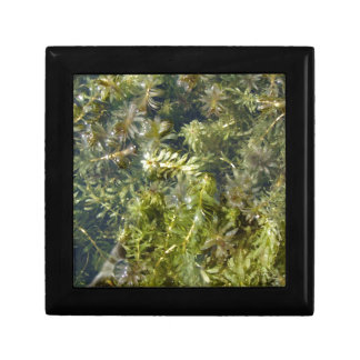 "Pond Weed (or, ""Lush Pond Plantlife"") Small Square Gift Box"