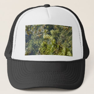 "Pond Weed (or, ""Lush Pond Plantlife"") Trucker Hat"