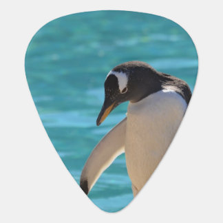 Pondering Penguin Plectrum
