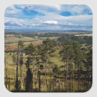 Ponderosa Pine from Devils Tower Square Sticker