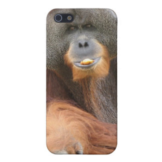 Pongo Ape iPhone Case Case For The iPhone 5