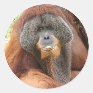 Pongo Orangutan Ape Sticker