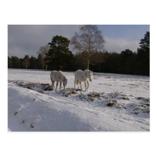 Ponies in the snow post cards