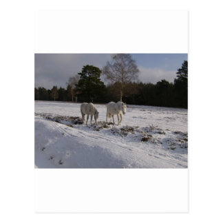 Ponies in the snow postcard