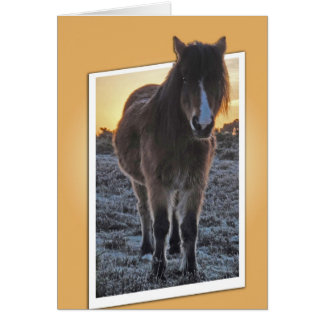 Pony cut-out card