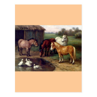 Pony donkey ducks farm postcard