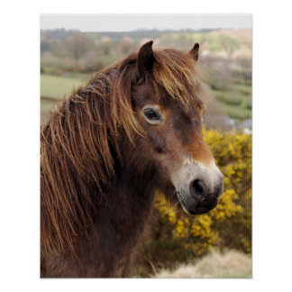 Pony Exmoor Poster
