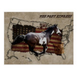 Pony Express Pinto Horse Delivering US Mail Postcard