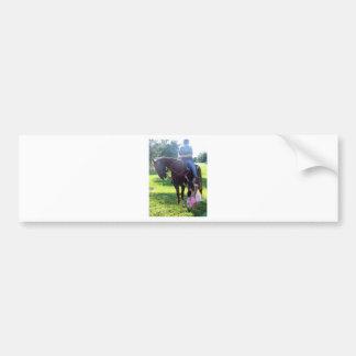Pony Girls Bumper Stickers