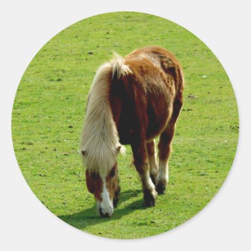 Pony Grazing in Field Stickers