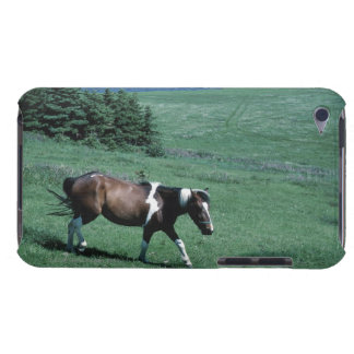 Pony in pasture iPod Case-Mate case