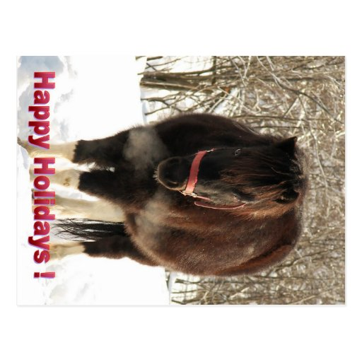 Pony in the Snow, Happy Holidays Postcard