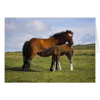 Pony Mare Feeding Foal blank notelet / card