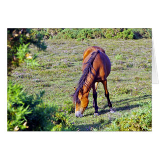 Pony New Forest England Card