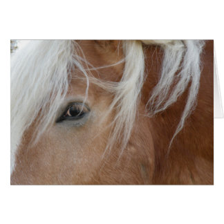 Pony notecard note card