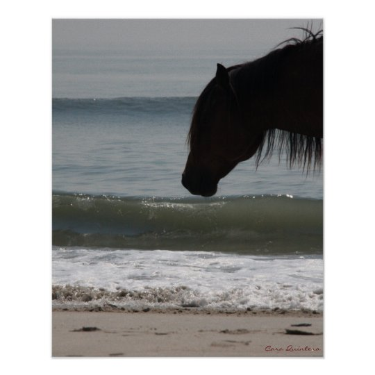 Pony On The Beach Poster