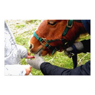 Pony Pet Stationery Design