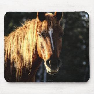 Pony Quarter Horse Portrait Equine Photo Mouse Pads