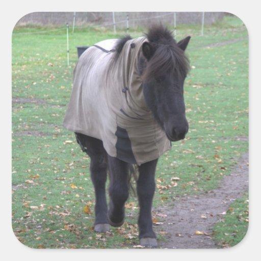 Pony Sticker