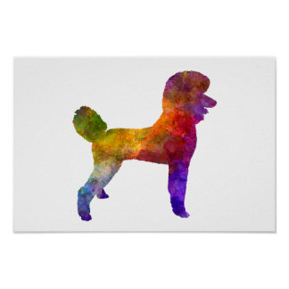 Poodle 01 in watercolor poster