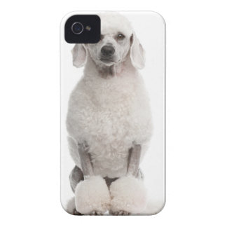 Poodle (1 year old) iPhone 4 case