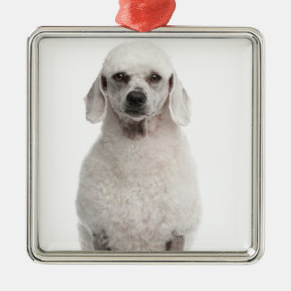 Poodle (1 year old) Silver-Colored square decoration