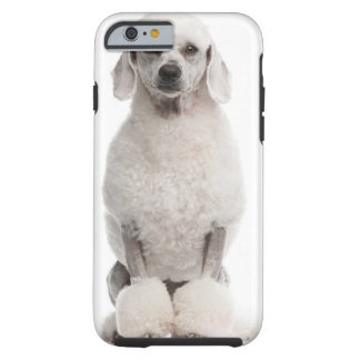 Poodle (1 year old) tough iPhone 6 case
