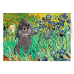 Poodle (8S) - Irises Greeting Cards