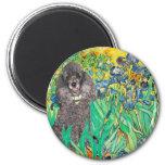 Poodle (8S) - Irises Magnets