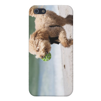 Poodle - Apricot - Poodle Play Case For The iPhone 5