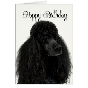 Poodle birthday cards invitations zazzle poodle birthday card bookmarktalkfo Gallery