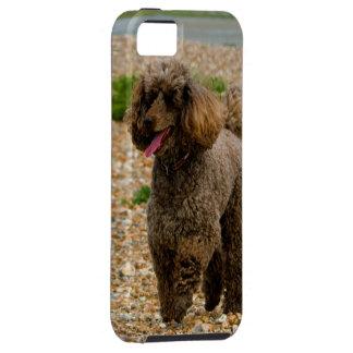 Poodle dog miniature beautiful photo at beach iPhone 5 case