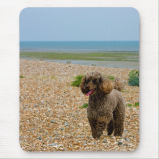 Poodle dog miniature beautiful photo at beach mouse pad