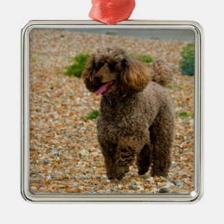 Poodle dog miniature beautiful photo at beach Silver-Colored square decoration