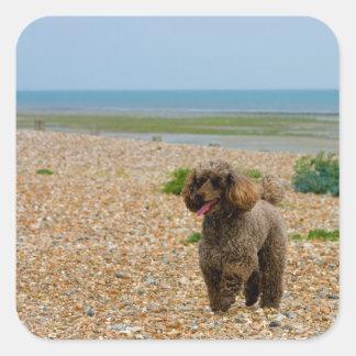 Poodle dog miniature beautiful photo at beach sticker