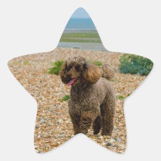 Poodle dog miniature beautiful photo at beach star sticker