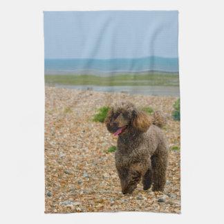 Poodle dog miniature beautiful photo at beach tea towel