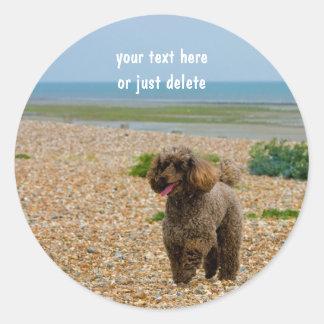 Poodle dog miniature beautiful photo beach custom round sticker