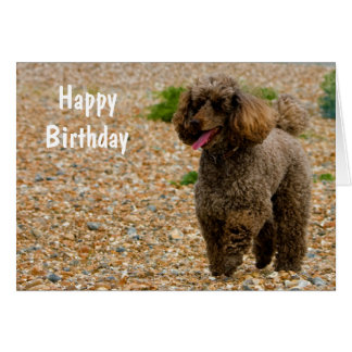 Poodle dog miniature beautiful photo birthday card